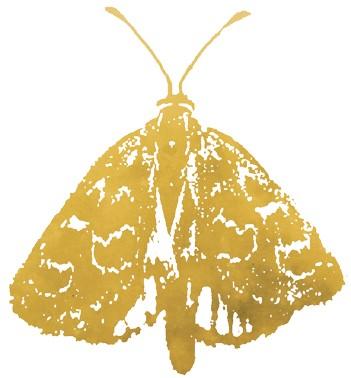 Critically endangered Golden Sun Moth